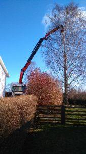 Kranbilstjänster - trädavverkning